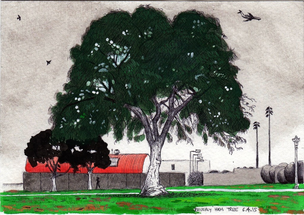 Beverly High Tree, June 4, 2015 2015 ink and gouache on paper 5.5x8 inches