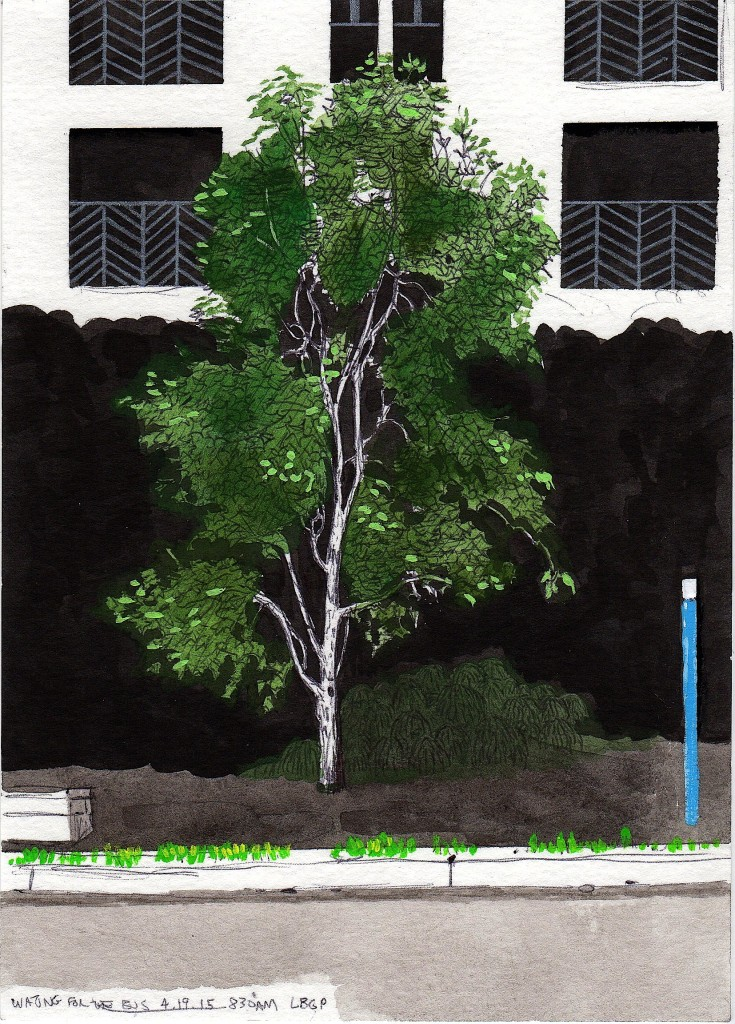 Lincoln Tree 2015 ink and gouache on paper 8x5 inches